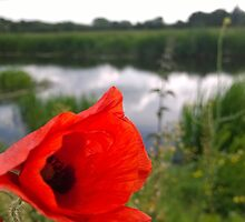 Poppy on river by Connor Bartlett