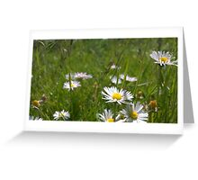 Daisies on river in norfolk Greeting Card