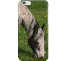 Horse in norfolk field iPhone Case/Skin