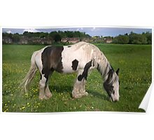 Horse in norfolk field Poster