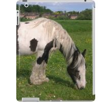Horse in norfolk field iPad Case/Skin