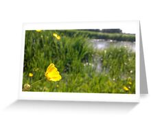 Buttercup over river in norfolk Greeting Card