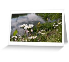 daisies over river in norfolk Greeting Card
