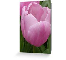 Closeup - pink tulip Greeting Card