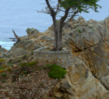 The Lone Cypress Along 17-Mile Drive Sticker