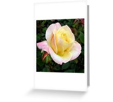 Dedicated rose - Abricot Queen Elizabeth Greeting Card
