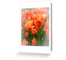 High Key Tulips Greeting Card