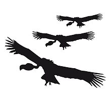 3 flying circling vultures by Style-O-Mat