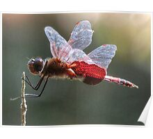 Red Dragonfly 2014 Poster