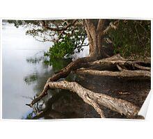 Framing Gogley's Lagoon - New South Wales Poster
