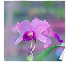 Pink Orchid Print. Poster