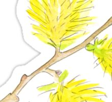 Yellow willow catkins watercolor Sticker