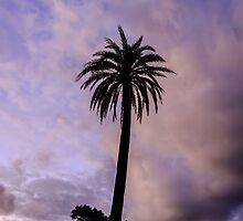 Palm Tree on Purple by Silken Photography