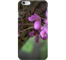 Judas Tree Flower iPhone Case/Skin