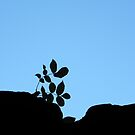 Plant on wall by mikequigley