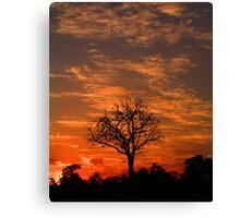 Single Sunset Tree Canvas Print