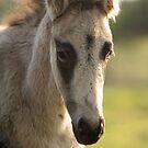 Cute Foal by Brian Edworthy