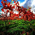 autumn, eastcoast tasmania. by tim buckley | bodhiimages