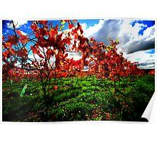 autumn, eastcoast tasmania. Poster