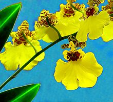 Oncidium Varicosum. Dancing lady orchid. by ronsphotos