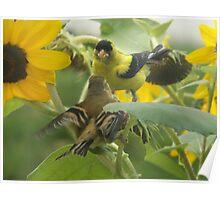SUNFLOWER BIRDS Poster