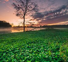 Early Morning At Lake Lorne by Julie Begg