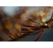 Abstract Spruce Needles Macro Photography Photographic Print