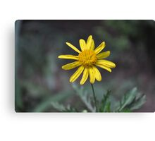 African Flower  Canvas Print