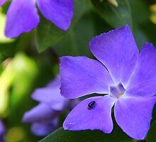 Purple Flower by JP-Photos