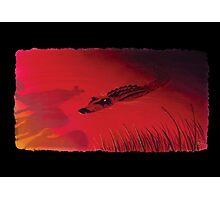 Crocodile Sunset Photographic Print