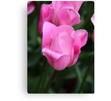 Pretty Pink Tulips Canvas Print