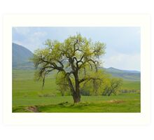 Green tree in Livermore Art Print