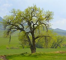 Green tree in Livermore by Brian Persons