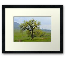 Green tree in Livermore Framed Print