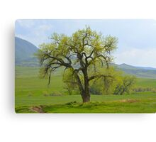 Green tree in Livermore Canvas Print