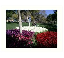 The tulips in the park,Konya Art Print