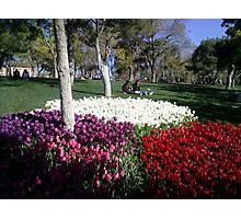 The tulips in the park,Konya Photographic Print