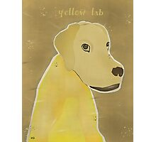 the yellow lab Photographic Print