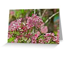 Pink Crabapple 2 Greeting Card
