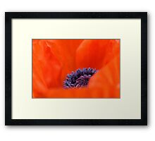 Poppy Heart  Framed Print