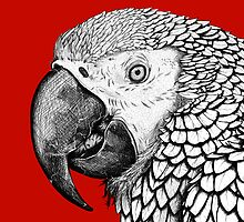 Parrot by Megan Hutto