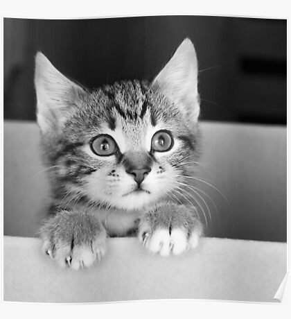 Kitten in a box 2 (non-clothing products) Poster