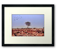 Lone Tree, Outback Australia. Framed Print