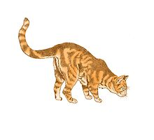 Ginger Cat Looking Down - Illustrated Design by Catie Atkinson