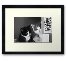 Street Cats (non-clothing products) Framed Print