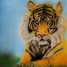 Tiger by Julie Thomas