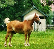 Palomino in Pasture by Susan Savad