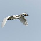 White Egret 2016-1 by Thomas Young