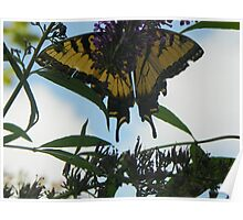 Butterfly016 Poster