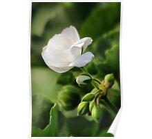 December Bloom Poster